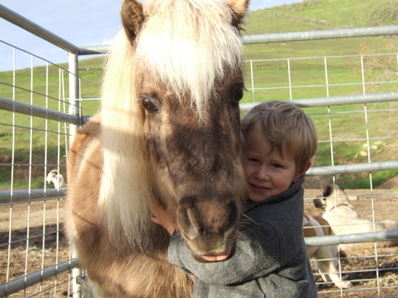 ''Mommy, can I have a brush pony?''